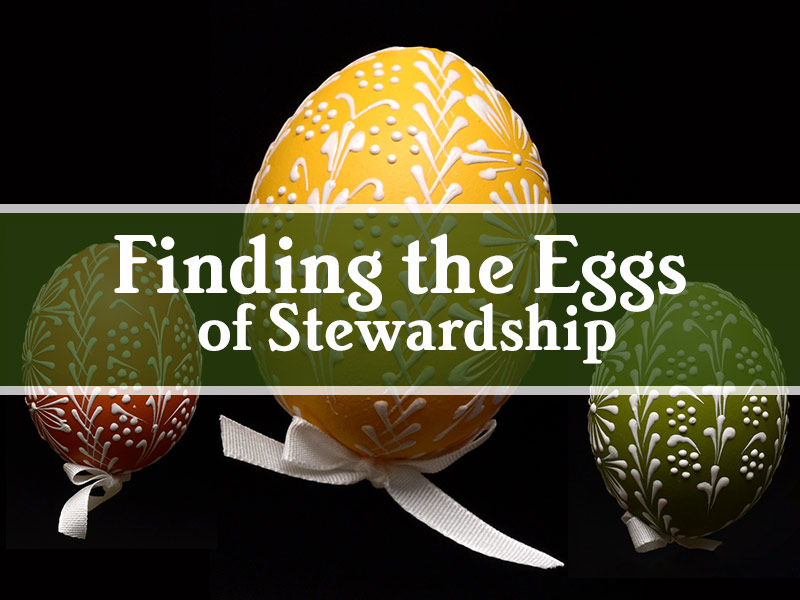 """Finding the Eggs"" of Stewardship"